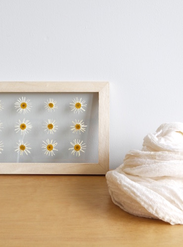 floweradjusgment-marguerite-1