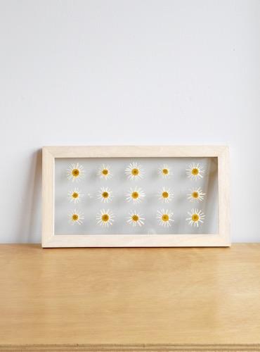 floweradjusgment-marguerite-2