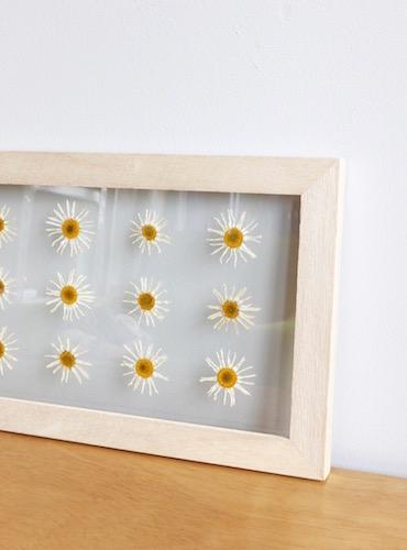 floweradjusgment-marguerite-3