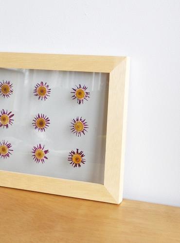 floweradjusgment-marguerite-7