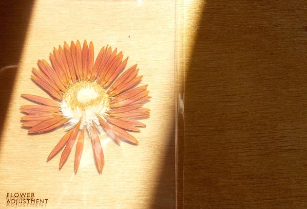 FlowerAdjustment-4