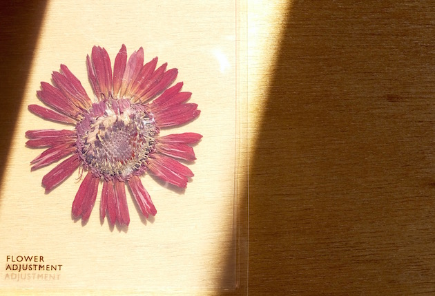 FlowerAdjustment-6